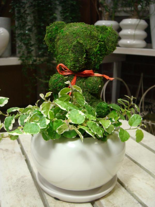 アニマルトピアリーモス♪動物シリーズ♪ゾウさん♪Sサイズ斑入りフィカスプミラを植え付けています♪陶器鉢植え・受け皿付き 場所取らずでちょこっと置くだけ♪誕生日やお祝い・プレゼントや景品にも♪