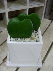 ラブラブハート(ハートホヤ)♪ラブリー♪インテリア陶器鉢植え 受け皿付き場所取らずでちょこっと置くだけ♪プレゼントや愛の告白 プロポーズに♪インテリア陶器鉢植えミニ観葉植物サイズ 多肉植物 サボテン