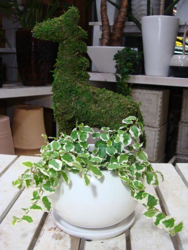 アニマルトピアリーモス♪動物シリーズ♪ウマさん(馬)♪Sサイズ斑入りフィカスプミラを植え付けています♪陶器鉢植え・受け皿付き 場所取らずでちょこっと置くだけ♪誕生日やお祝い・プレゼントや景品にも♪