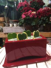 ラブラブハート (ハートホヤ) ラブリー♪レッドインテリア陶器鉢♪スタイリッシュな観葉植物青葉2枚と斑入り葉2枚の4枚のハートを集めました♪幸せが叶う四つ葉仕上げ♪プレゼントにも♪楽ギフ_包装 楽ギフ_メッセ入力バレンタインデーにも♪