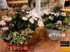 新商品価格♪お花畑の寄せ植えシリーズ♪季節の旬のお花たちを使用しておまかせの寄せ植えをお届け♪S-サイズプラスチック製で軽量化鉢カラーをお選びください♪おまかせピック付き♪【楽ギフ_包装】【楽ギフ_メッセ入力】【送料無料】ギフト特集