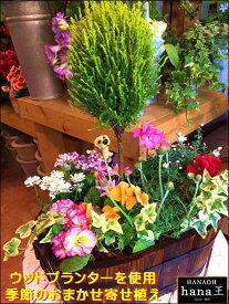 ゴールドクレスト トピアリー仕立て(スタンド仕立て) 横長のウッドプランターで寄せ植え作成♪おまかせピック付き♪【季節のお花 寄せ植え フラワーギフト 送料無料】