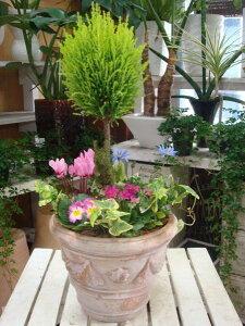 ゴールドクレスト トピアリー(スタンド)仕立て♪季節のオシャレ寄せ植え♪アンティーク風のテラコッタ陶器鉢植え♪【季節のお花 寄せ植え ギフト 送料無料】『One'sオリジナル植え替え