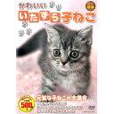 DVD かわいいいたずら子ねこ CCP-8008 子猫 猫 撮りおろしかわいい動物シリーズ どうぶつ ペット ホビー 癒し 動画 映…