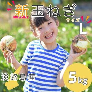 【新玉ねぎ】5kg Lサイズ   送料無料(北海道・沖縄を除く) 淡路島産  新玉葱