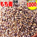 もち麦 国産 1kg ダイシモチ 送料無料 もちむぎ ぽっきり