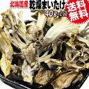 乾燥 まいたけ 国産 40g×1袋 マイタケ 北海道産 訳あり 折れや欠け 送料無料 まいたけ茶 舞茸 に 黄茶色