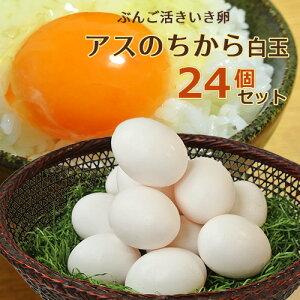【たっぷりプレゼント付き】ぶんご活きいき卵アスのちから白玉 6個入り×4パック(24個セット) 大分ファーム/農場HACCP認証農場【送料無料】