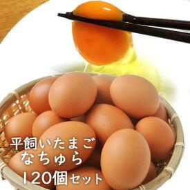 【先着4000円以上で800円OFFクーポン】平飼い卵 なちゅら 10個入り×12パック(120個セット)大分県産 梶原種鶏孵化場【送料無料】
