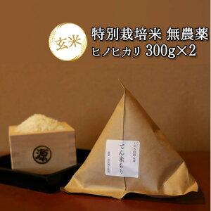 5%還元 大分県竹田市産 ヒノヒカリ 特別栽培米(玄米)【無農薬】「てん米もり」300g×2【送料無料】【バレンタインクーポン】