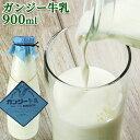 5%還元 大分県産 生乳100% 希少なガンジー牛乳 900ml 高乳脂肪分のゴールデンミルク(冷蔵) ホモゲナイズ 久住高原 ガ…