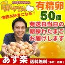 ■10個パック対応■ 有精卵50個