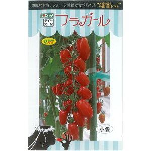 トキタ種苗 トマト 種子 「フラガール」 小袋 8粒 規格 種 野菜の種 野菜種 ミニトマト 高糖度 トキタ
