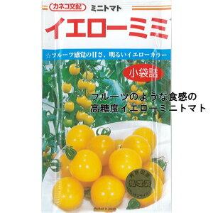 カネコ種苗 トマト種子 「イエローミミ」 小袋(18粒)規格 種 野菜種 野菜種子 イエロー ミニトマト フルーツ 高糖度