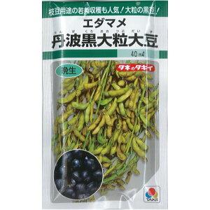 タキイ種苗 エダマメ 枝豆 種子 「丹波黒大粒大豆」 小袋 40ml 規格 種 野菜種 晩生 大豆 ダイズ 正月 煮豆 6月