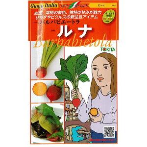 トキタ種苗 グストイタリア ビーツ 種子 「ルナ」 小袋(80粒)規格[野菜種][イタリア野菜][テーブルビート][砂糖大根][種][オレンジ]