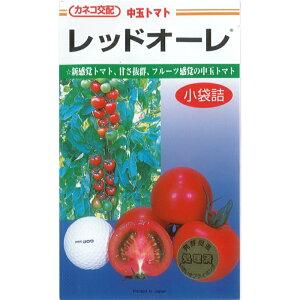 カネコ種苗 トマト種子 「レッドオーレ」 小袋 19粒 規格 レッド 赤 中玉 トマト ミディ トマト 種 野菜種 種子