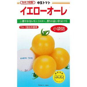 カネコ種苗 トマト種子 「イエローオーレ」 小袋 20粒 規格 イエロー 黄 中玉 トマト ミディ トマト 種 野菜種 種子