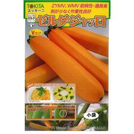 トキタ種苗 ズッキーニ 種子 「ゼルダ・ジャッロ」 小袋 10粒 規格 種 野菜 野菜種 野菜種子 ペポカボチャ 収穫容易 黄 トゲが少ない
