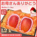 母の日ギフト専用 宮崎完熟マンゴー(中玉Lサイズ×2玉/約620g)宮崎産 送料無料