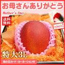 母の日ギフト専用 宮崎完熟マンゴー(特大3Lサイズ×1玉/約460g)宮崎産 送料無料