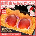 母の日ギフト専用 宮崎完熟マンゴー(小玉Mサイズ×2玉/約500g)宮崎産 送料無料