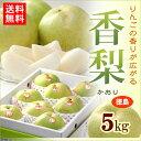 香梨(5kg)徳島産 かおり 青梨の最大級品種 送料無料