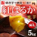 紅はるか M-L(5kg)熊本産 さつま芋 サツマイモ 甘藷 焼き芋 焼いも 薩摩芋 送料無料