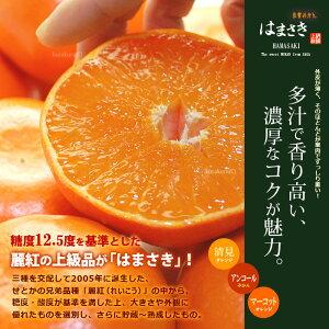 濃厚柑橘「はまさき」