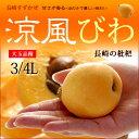 涼風びわ(3-4L/約1kg)長崎産 ビワ 枇杷 ハウス栽培 送料無料