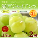 瀬戸ジャイアンツ4L×2房(約1.2kg)岡山産 ぶどう ブドウ 葡萄 皮ごと 種無し 送料無料