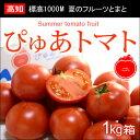 ぴゅあトマト(約900g)高知産 夏の濃厚フルーツトマト 送料無料