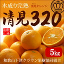 木成り完熟清見オレンジ 清見320(約5kg)和歌山産 和歌山下津クラウン果樹協同組合 送料無料