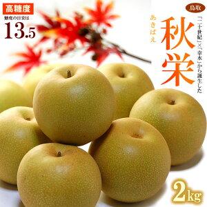 秋栄梨(約2kg)鳥取産 秋栄(あきばえ)は平均糖度13.5度を誇る高糖度赤梨 食品 フルーツ 果物 和梨 送料無料
