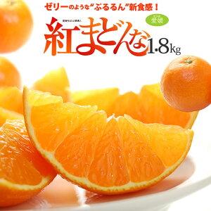 紅まどんな 3L(約1.8kg)愛媛産 秀品 贈答用 みかん ミカン 蜜柑 食品 フルーツ 果物 みかん 送料無料 お歳暮 御歳暮 ギフト