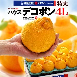 ハウス デコポン 4L(12玉前後/約5kg)熊本産 贈答 ギフト 糖度13度以上 大玉 甘い 熊本デコポン 不知火 でこぽん みかん 高糖度 光センサー 食品 フルーツ 果物 みかん デコポン 送料無料