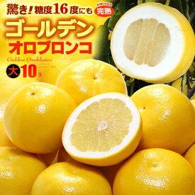 ゴールデンオロブロンコ 大(10玉/約4.4kg)カリフォルニア産 食品 フルーツ 果物 グレープフルーツ 高糖度 大玉 甘い 送料無料