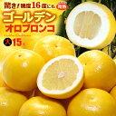 ゴールデンオロブロンコ 大(15玉/約6.6kg)カリフォルニア産 食品 フルーツ 果物 グレープフルーツ 高糖度 大玉 甘い …