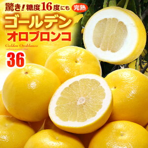 ゴールデンオロブロンコ(32-40玉/約12kg)カリフォルニア産 グレープフルーツ 高糖度 甘い アメリカ 食品 フルーツ 果物 グレープフルーツ 送料無料