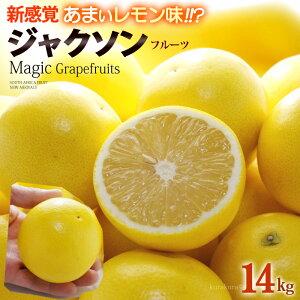 マジックグレープフルーツ ジャクソンフルーツ(64玉前後/約14kg)南アフリカ産 新種 グレープフルーツ 食品 フルーツ 果物 グレープフルーツ 送料無料