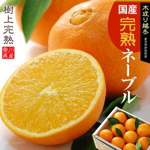越冬完熟葉付きネーブルオレンジ(5kg)香川産 国産オレンジ 柑橘 食品 フルーツ 果物 みかん 送料無料