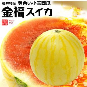 金福スイカ(約2kg-2.5kg×1玉)福井産 すいか 西瓜 黄色 食品 フルーツ 果物 スイカ 送料無料