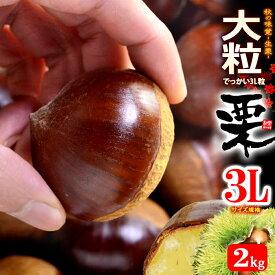 栗3L(約2kg)茨城・熊本・愛媛産 大粒 和栗 くり クリ 食品 フルーツ 果物 栗 送料無料