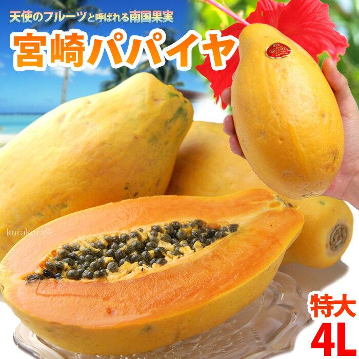 宮崎パパイヤ4L(約2kg)宮崎産 秀品 ギフト 贈答 国産 完熟 パパイア サンライズソロ 食品 フルーツ 果物 パパイヤ 送料無料