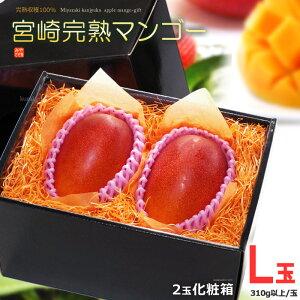 宮崎マンゴー(L×2玉/約600g)宮崎産 秀品 ギフト 贈答 国産 高糖度 甘い 食品 フルーツ 果物 マンゴー 送料無料