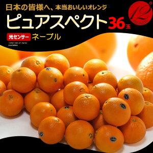 ピュアスペクトブラック ネーブル(36玉/約8.5kg)アメリカ産 糖度12度以上 カリフォルニア オレンジ ネーブル 高糖度 甘い 食品 フルーツ 果物 みかん オレンジ 送料無料 purespect black