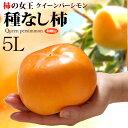 クイーンパーシモン5L(約4kg)和歌山産 種なし柿 種無し柿 大玉 ギフト 食品 フルーツ 果物 柿 送料無料