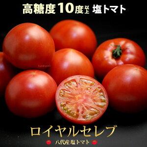 塩トマト ロイヤルセレブ(約900g)熊本県八代産 とまと 高級 フルーツトマト 糖度10度以上 高糖度 甘い 八代 塩トマト 食品 野菜 きのこ トマト 送料無料