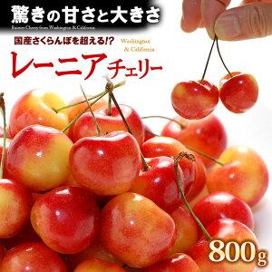 レーニアチェリー(800g)アメリカワシントン州産 レイニアチェリー サクランボ 食品 フルーツ 果物 さくらんぼ アメリカンチェリー 送料無料
