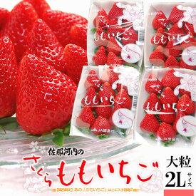 さくらももいちご(220g×4P)徳島県佐那河内産 化粧箱 ももいちご 桜 桃 いちご イチゴ 苺 4パック 高糖度 甘い ギフト 贈答用 高級 食品 フルーツ 果物 いちご 送料無料